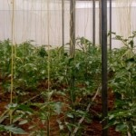 Greenhouse investment kilifi